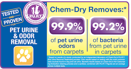 Pet Urine & Odor Removal by Chem-Dry of New Port Richey Removes 99.9 of Pet Urine Odors and 99.2% of Pet Urine Bacteria